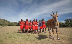 Maasai moran with eland