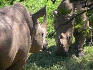 Ol Chorro Rhino Sanctuary visit