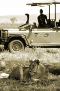 Saruni car with lions
