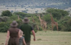 Walking the Mara plains