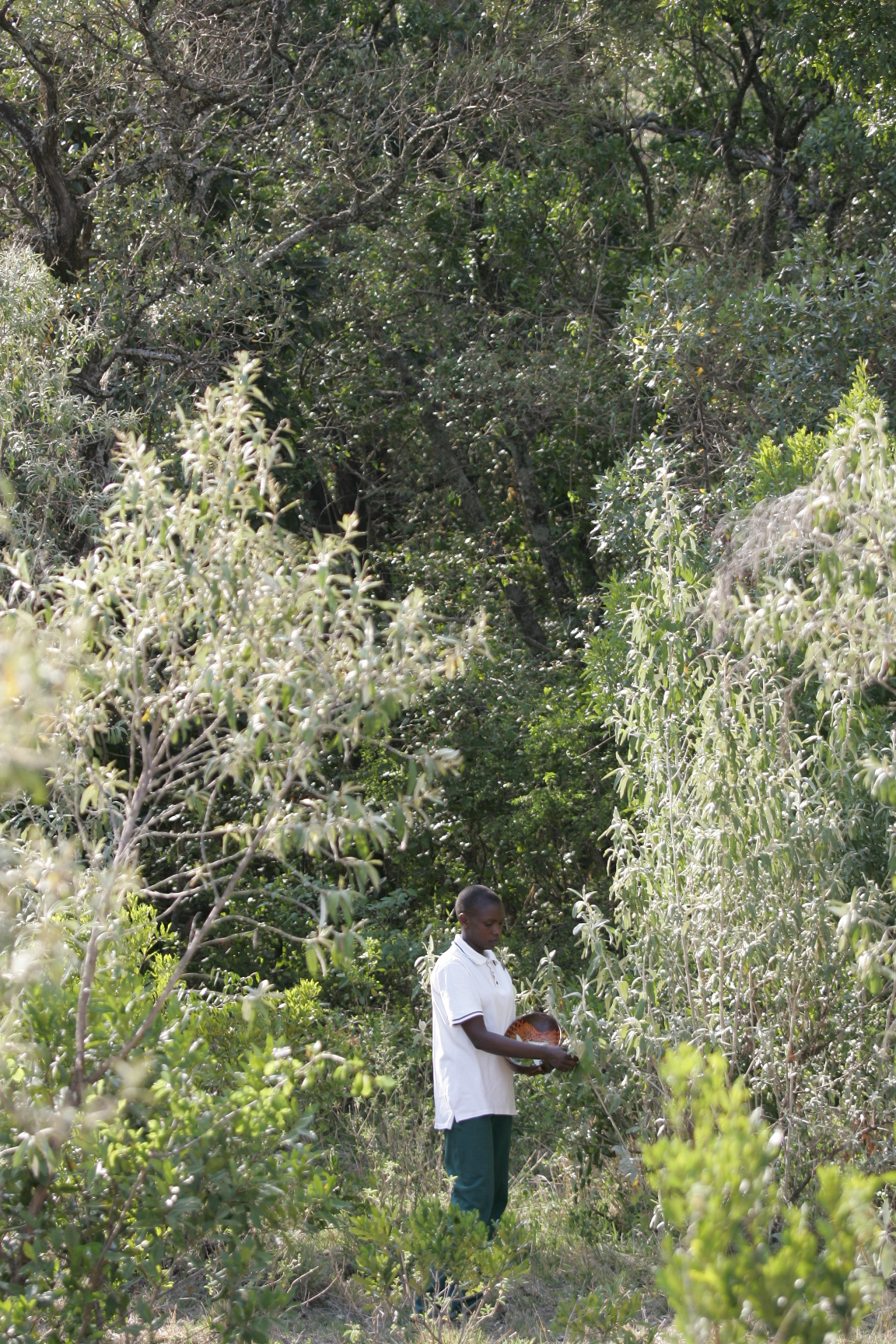 Collecting local flora for treatments
