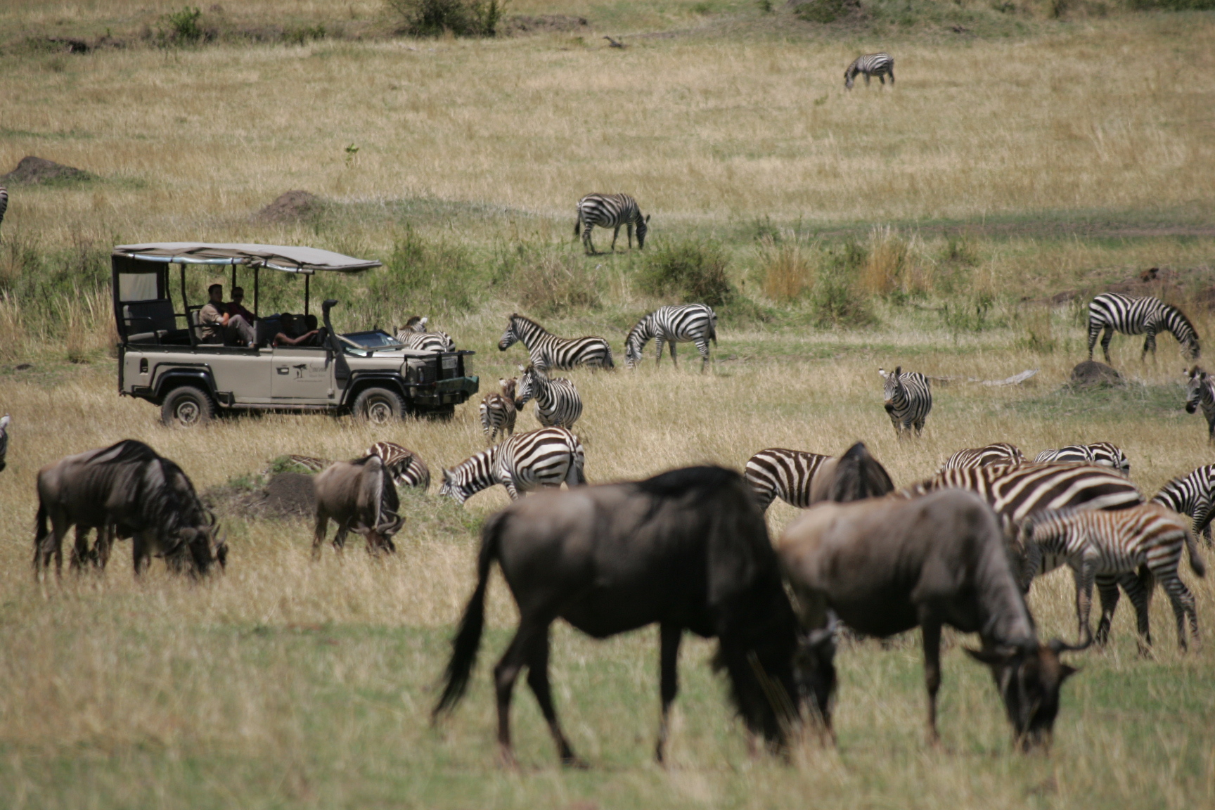 Game driving through the Great Migration in the Mara 3