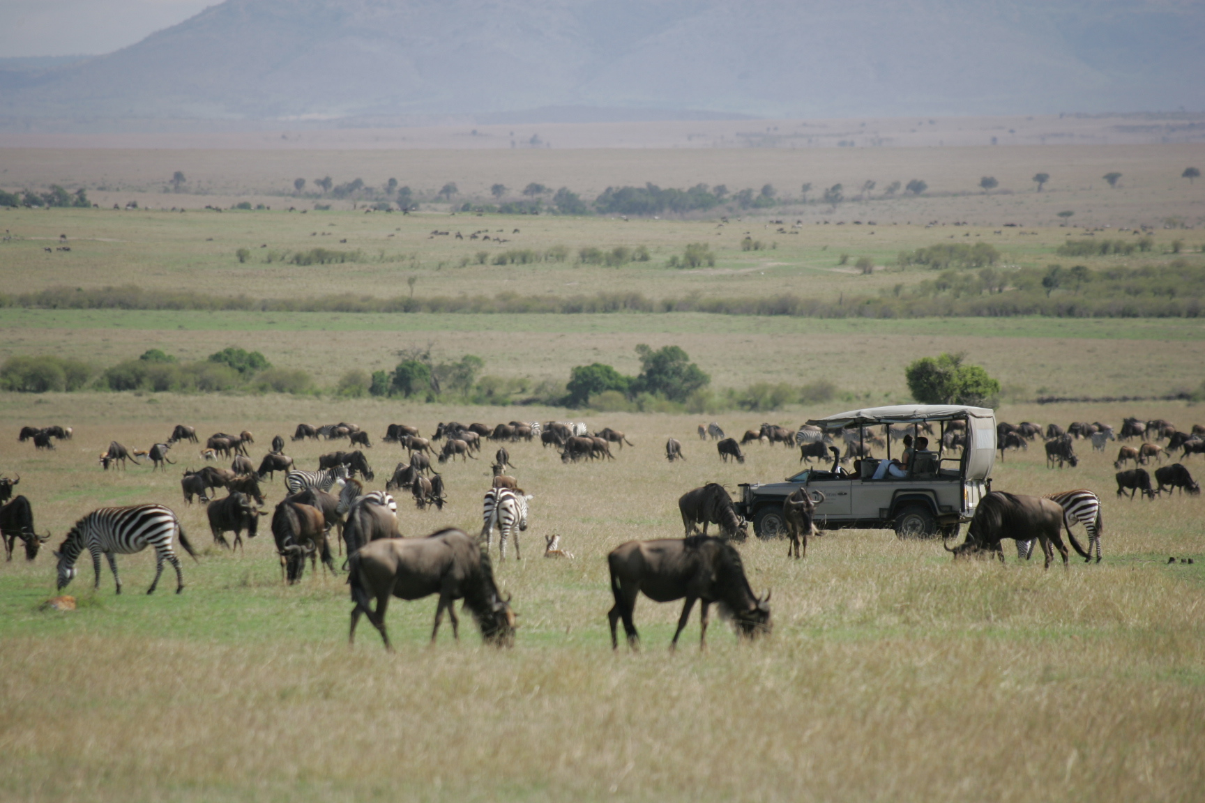 Game driving through the Great Migration in the Mara 5