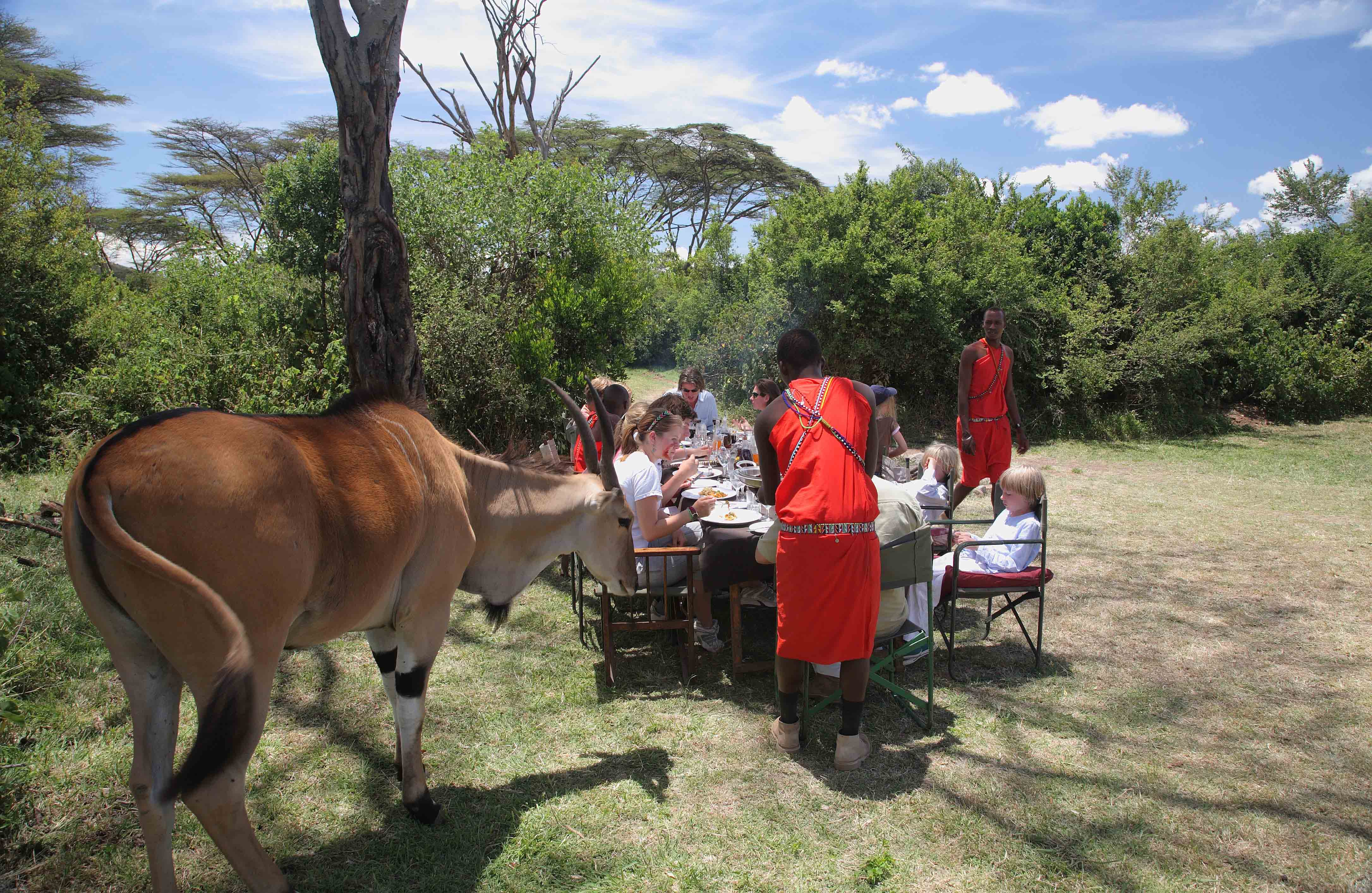 Lunch in the bush with eland at Saruni Mara