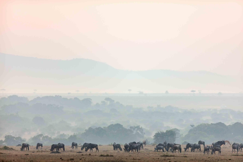 Mara Landscape by Alex Shalamov