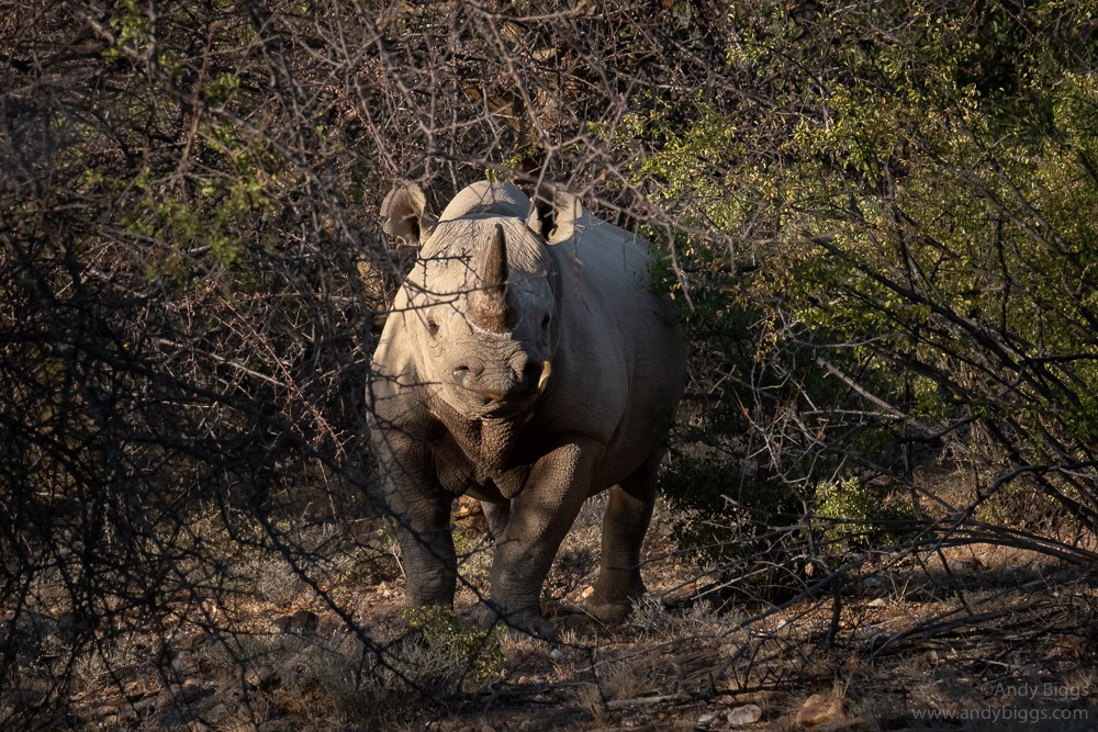 Rhino Tracking_Andy Biggs