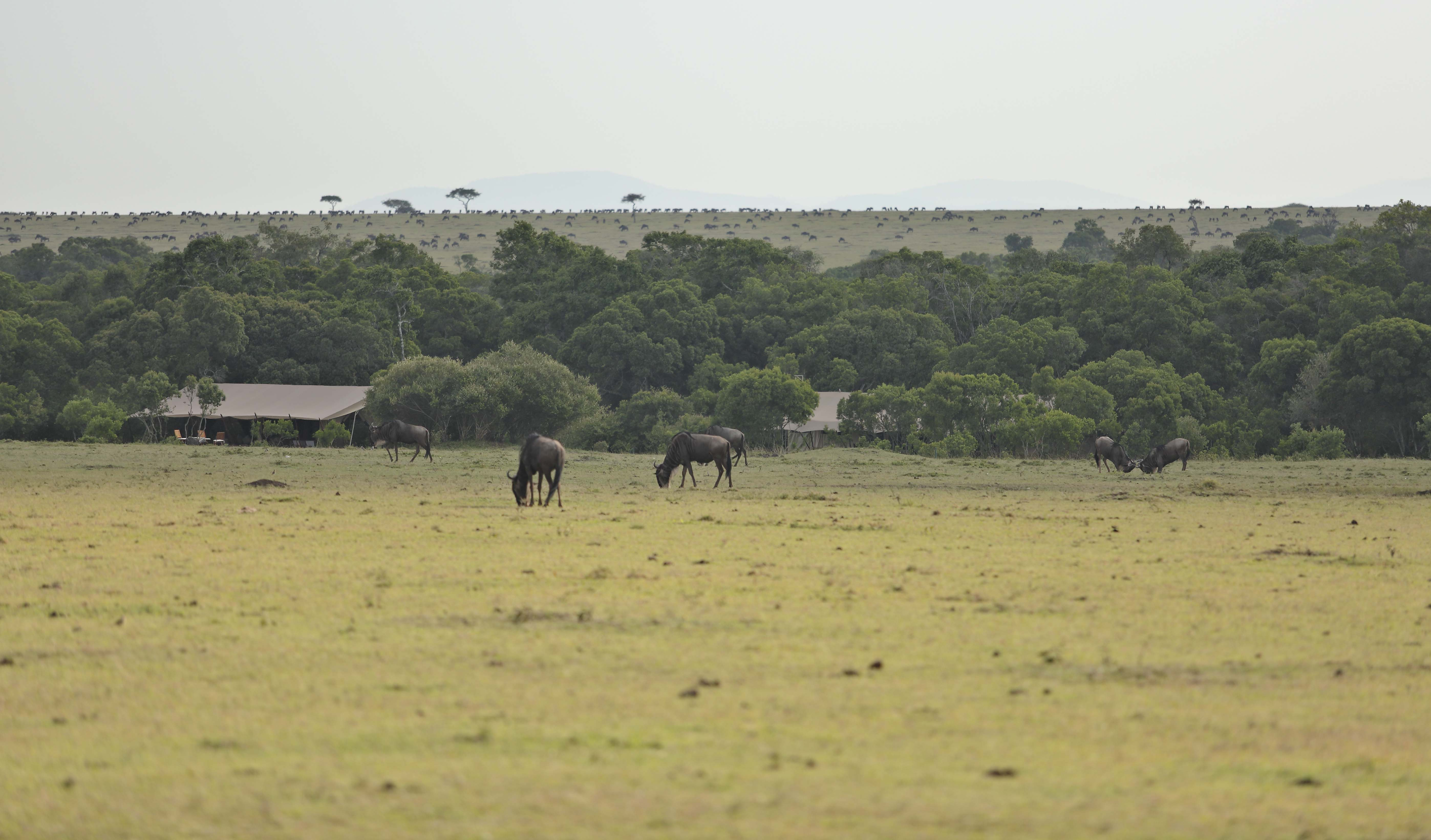 Saruni Wild - In the thick of the wildlife