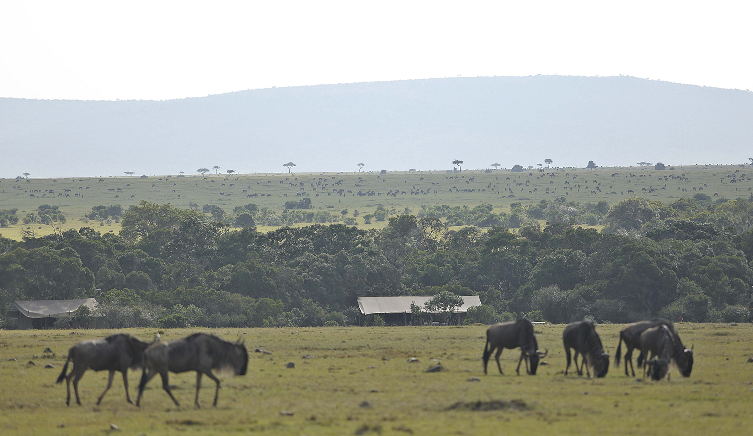 Saruni Wild - surrounded by the famous Masai Mara migration