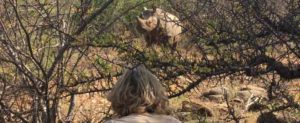 Rhino Tracking Saruni Rhino